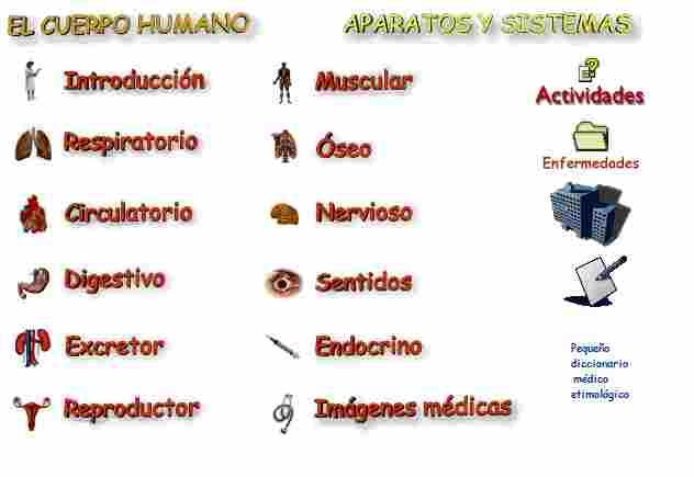 El Cuerpo Humano Aparatos Y Sistemas Para Jefaturas