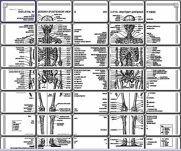 MAPA MURAL esqueleto humano, vista anterior y posterior 5X7 HOJA ...