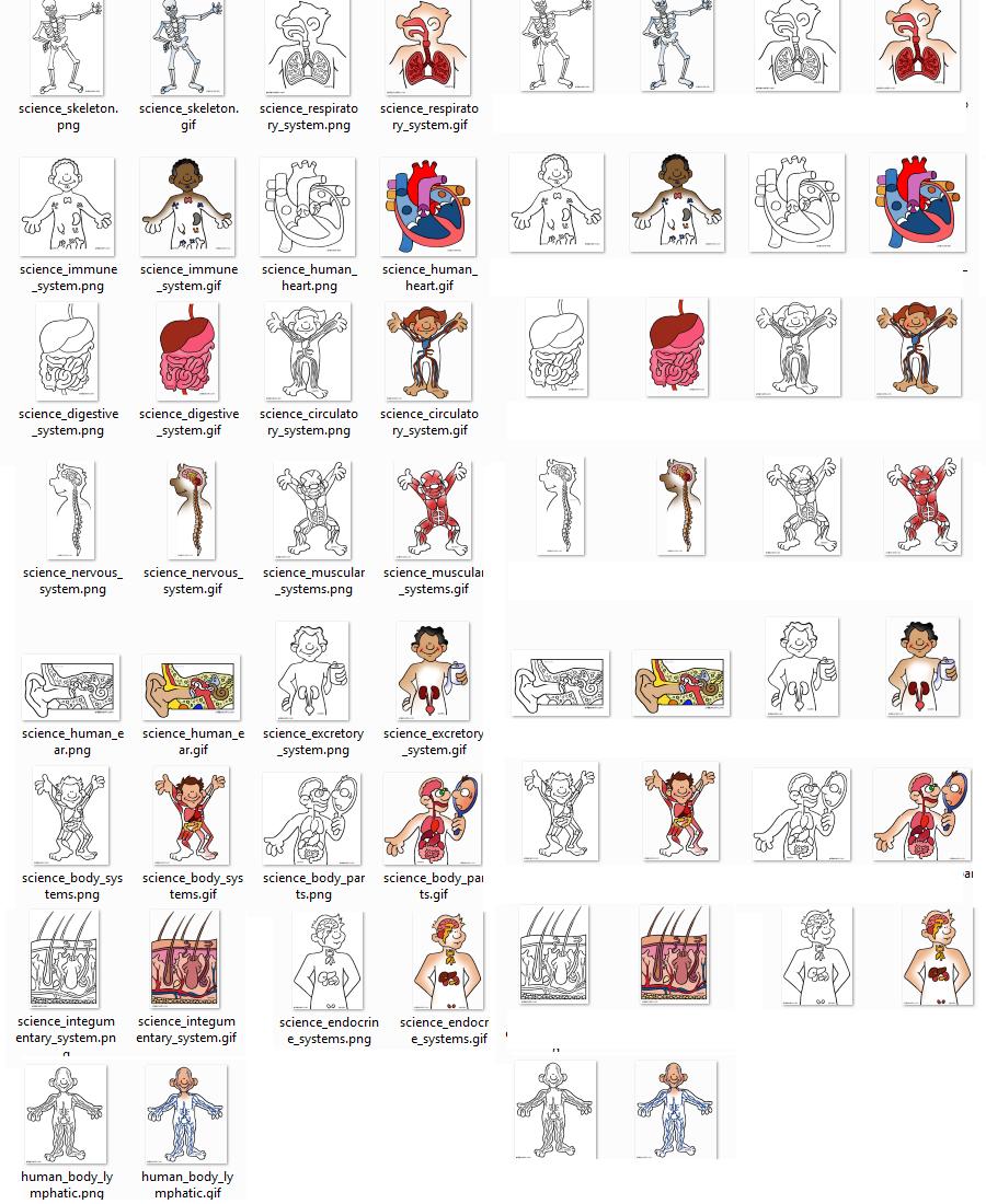 """FIGURITAS de :""""El cuerpo humano"""" para colorear (en Inglés) « PARA ..."""