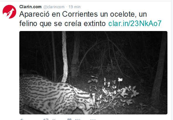Clarín.com (@clarincom) - Twitter