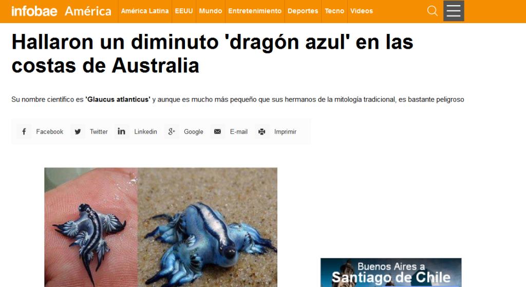 Hallaron un diminuto dragón azul en las costas de Australia - Australia, Dragon Azul - América