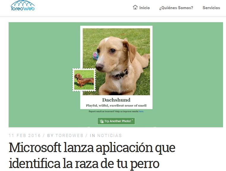 Proyecto de Microsoft identifica razas de perros - ToreoWeb